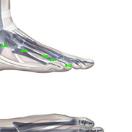 GB44 Gallbladder Meridian Acupuncture Point - Skeletal / Skeleton level.