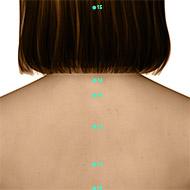 GV13 Governing Vessel Meridian Acupuncture Point - Dermal / Skin level.