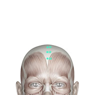 GV22 Governing Vessel Meridian Acupuncture Point - Muscular / Muscle level.