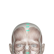 GV23 Governing Vessel Meridian Acupuncture Point - Muscular / Muscle level.