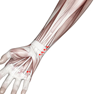 HT04 Heart Meridian Acupuncture Point - Muscular / Muscle level.