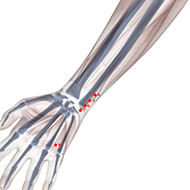 HT04 Heart Meridian Acupuncture Point - Skeletal / Skeleton level.