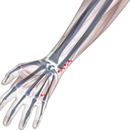 HT05 Heart Meridian Acupuncture Point - Skeletal / Skeleton level.