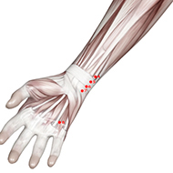 HT06 Heart Meridian Acupuncture Point - Muscular / Muscle level.