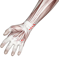 HT07 Heart Meridian Acupuncture Point - Muscular / Muscle level.