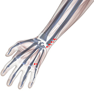 HT07 Heart Meridian Acupuncture Point - Skeletal / Skeleton level.
