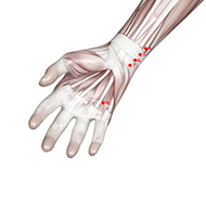 HT08 Heart Meridian Acupuncture Point - Muscular / Muscle level.