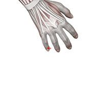 HT09 Heart Meridian Acupuncture Point - Muscular / Muscle level.
