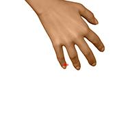 HT09 Heart Meridian Acupuncture Point - Dermal / Skin level.