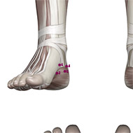 KD04 Kidney Meridian Acupuncture Point - Muscular / Muscle level.