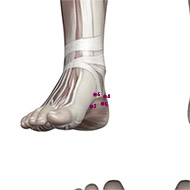 KD06 Kidney Meridian Acupuncture Point - Muscular / Muscle level.