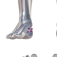 KD06 Kidney Meridian Acupuncture Point - Skeletal / Skeleton level.