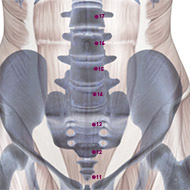 KD14 Kidney Meridian Acupuncture Point - Skeletal / Skeleton level.