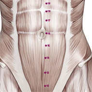 KD15 Kidney Meridian Acupuncture Point - Muscular / Muscle level.