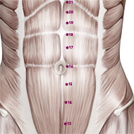 KD16 Kidney Meridian Acupuncture Point - Muscular / Muscle level.
