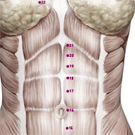 KD19 Kidney Meridian Acupuncture Point - Muscular / Muscle level.