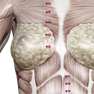 KD22 Kidney Meridian Acupuncture Point - Muscular / Muscle level.