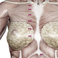 KD23 Kidney Meridian Acupuncture Point - Muscular / Muscle level.