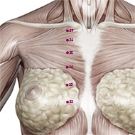 KD24 Kidney Meridian Acupuncture Point - Muscular / Muscle level.