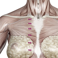 KD25 Kidney Meridian Acupuncture Point - Muscular / Muscle level.