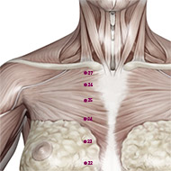 KD26 Kidney Meridian Acupuncture Point - Muscular / Muscle level.