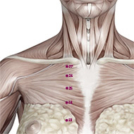 KD27 Kidney Meridian Acupuncture Point - Muscular / Muscle level.