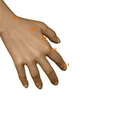 LI01 Large Intestine Meridian Acupuncture Point - Dermal / Skin level.