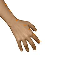LI03 Large Intestine Meridian Acupuncture Point - Dermal / Skin level.