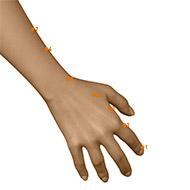 LI04 Large Intestine Meridian Acupuncture Point - Dermal / Skin level.