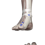 LV03 Liver Meridian Acupuncture Point - Muscular / Muscle level.