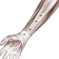 PC06 Pericardium Meridian Acupuncture Point - Muscular / Muscle level.