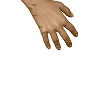 SI01 Small Intestine Meridian Acupuncture Point - Dermal / Skin level.