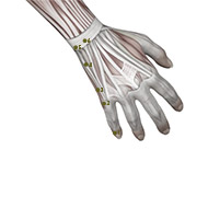 SI02 Small Intestine Meridian Acupuncture Point - Muscular / Muscle level.