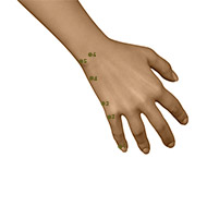 SI03 Small Intestine Meridian Acupuncture Point - Dermal / Skin level.