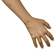 SI04 Small Intestine Meridian Acupuncture Point - Dermal / Skin level.