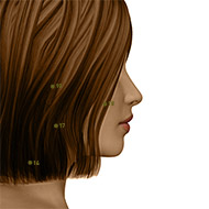 SI18 Small Intestine Meridian Acupuncture Point - Dermal / Skin level.
