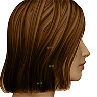 SI19 Small Intestine Meridian Acupuncture Point - Dermal / Skin level.