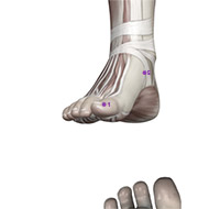 SP01 Spleen Meridian Acupuncture Point - Muscular / Muscle level.