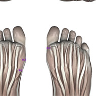 SP02 Spleen Meridian Acupuncture Point - Muscular / Muscle level.