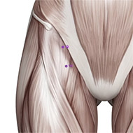SP12 Spleen Meridian Acupuncture Point - Muscular / Muscle level.