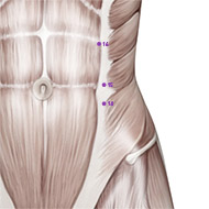 SP14 Spleen Meridian Acupuncture Point - Muscular / Muscle level.