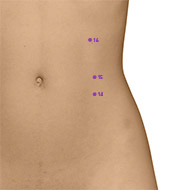 SP14 Spleen Meridian Acupuncture Point - Dermal / Skin level.