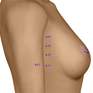 SP19 Spleen Meridian Acupuncture Point - Dermal / Skin level.