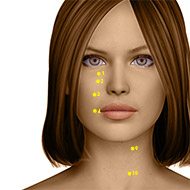 ST03 Stomach Meridian Acupuncture Point - Dermal / Skin level.