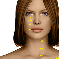 ST04 Stomach Meridian Acupuncture Point - Dermal / Skin level.