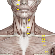 ST10 Stomach Meridian Acupuncture Point - Muscular / Muscle level.