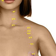 ST12 Stomach Meridian Acupuncture Point - Dermal / Skin level.