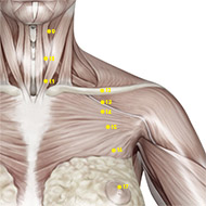 ST13 Stomach Meridian Acupuncture Point - Muscular / Muscle level.
