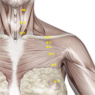 ST14 Stomach Meridian Acupuncture Point - Muscular / Muscle level.