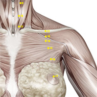 ST15 Stomach Meridian Acupuncture Point - Muscular / Muscle level.